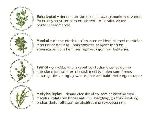 Listerine aktive ingredienser og essensielle oljer - LISTERINE® Munnskyll